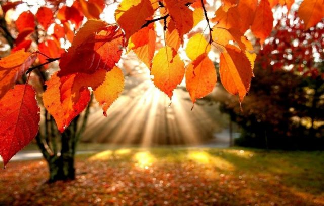 осень по английски