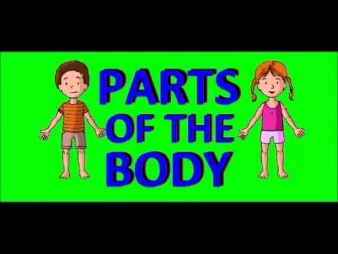 Части тела на английском