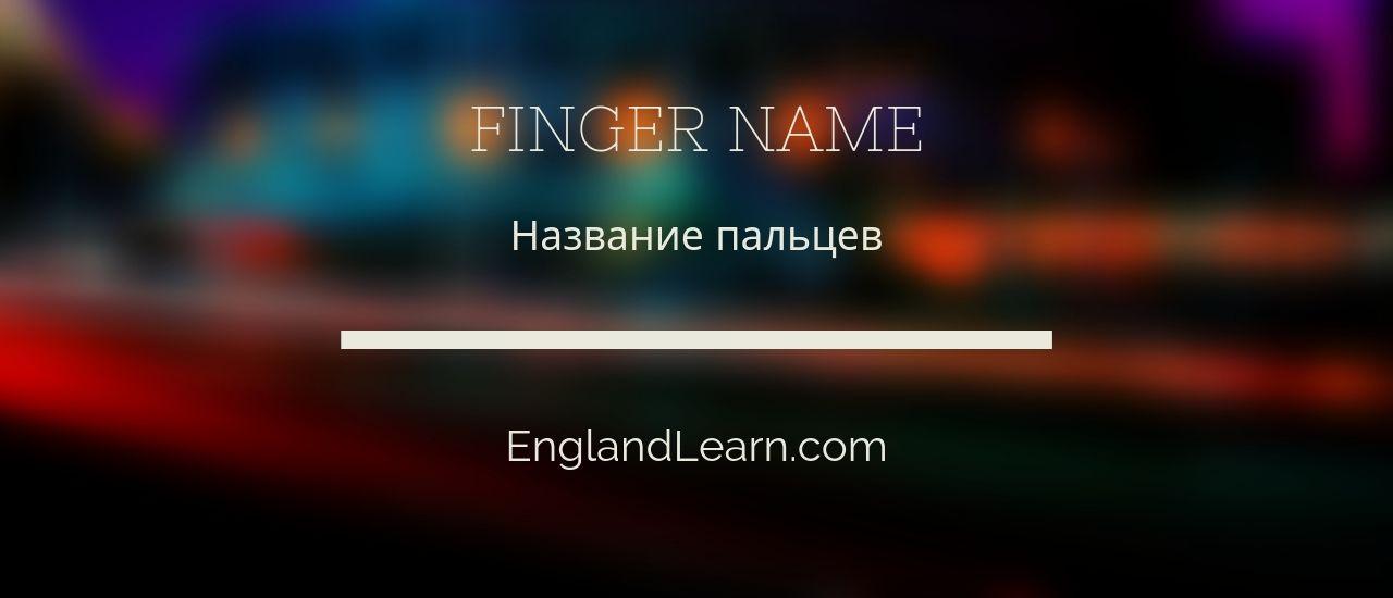 названия пальцев на английском