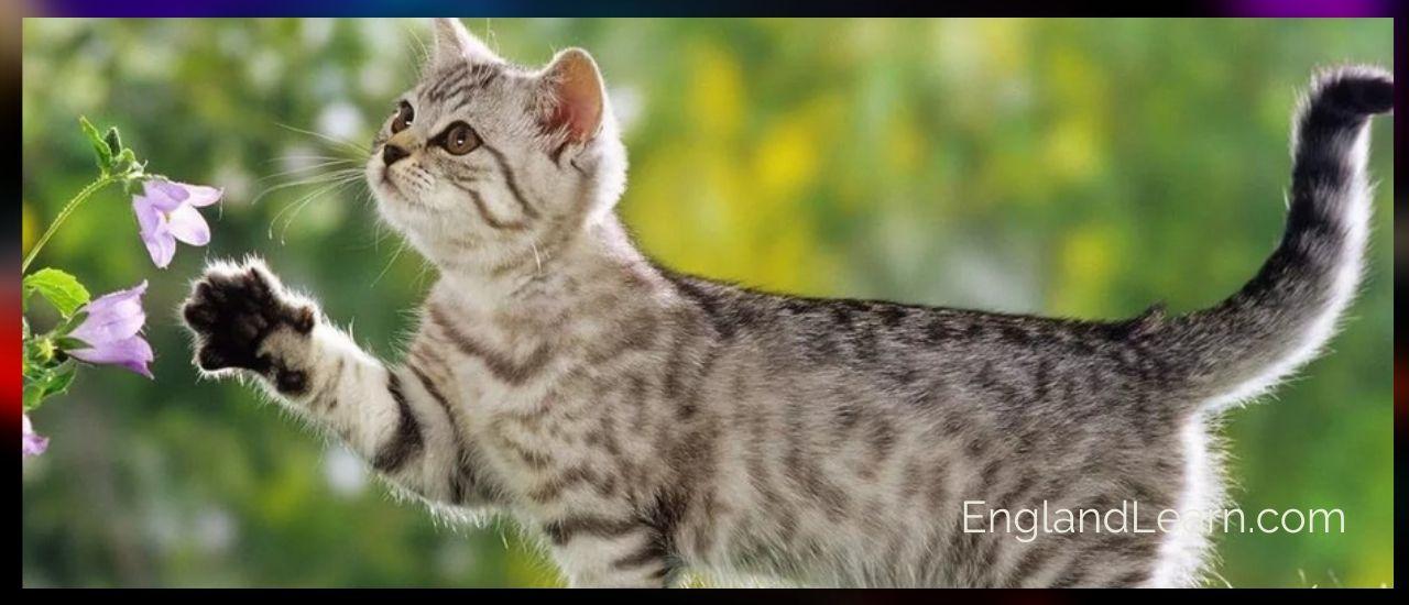 кошки на английском языке