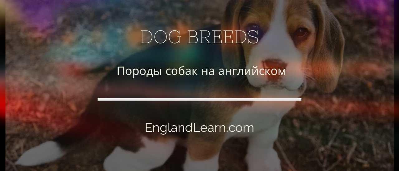 Собака на английском языке
